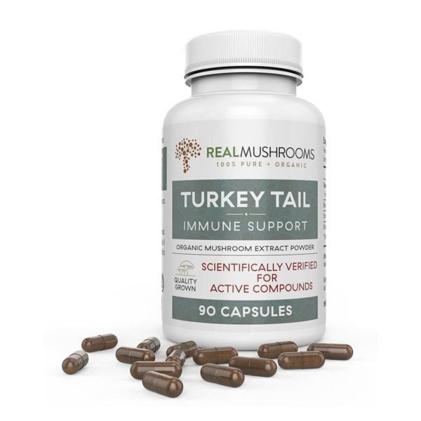turkey tail mushroom capsules 1
